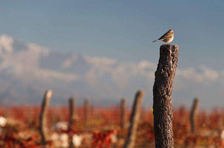 Argentina: the country of the highest and most southern vineyards in the world