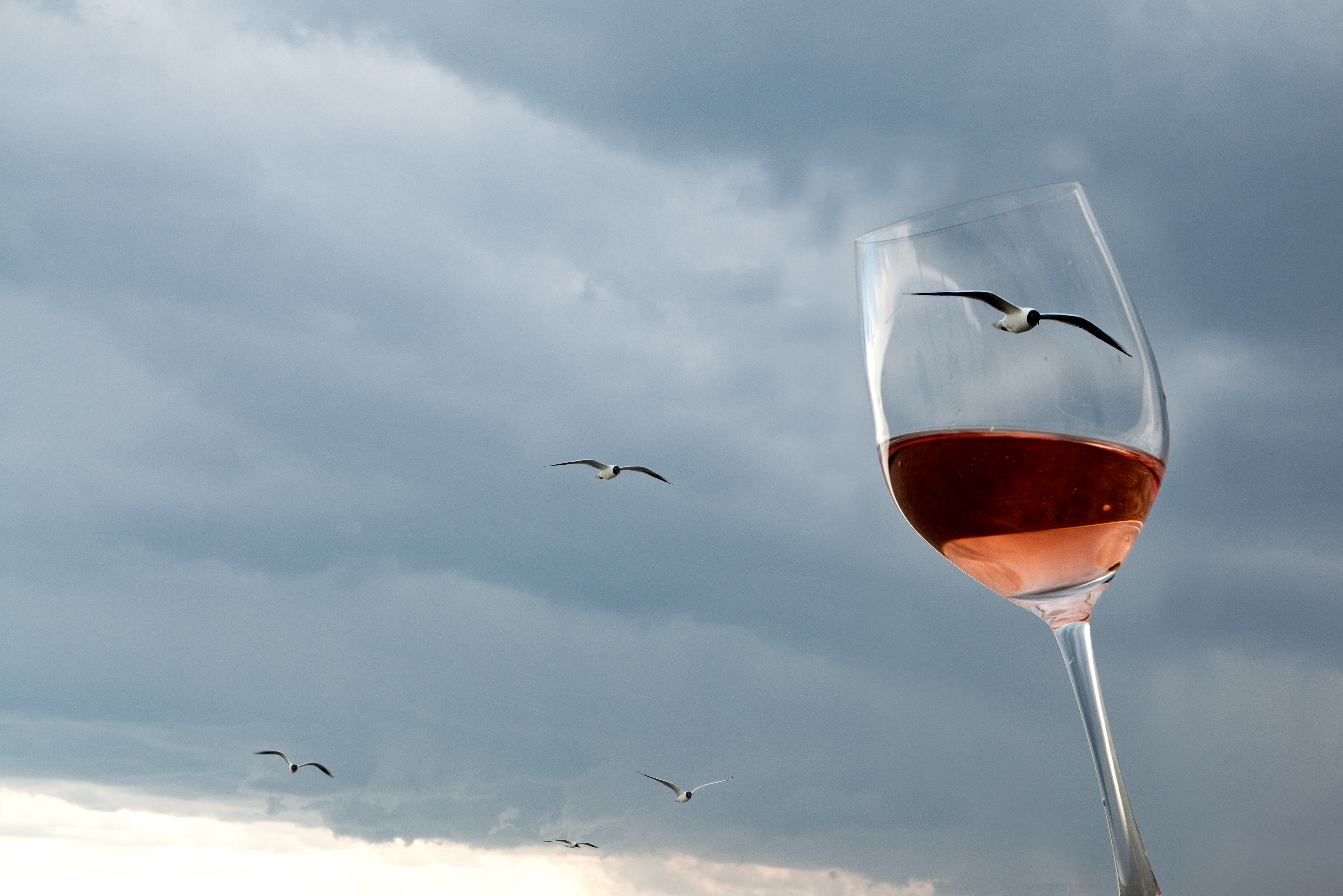 Wine exports from Austria: rapid growth