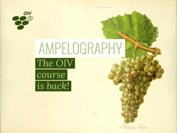 The new OIV International Course in Ampelography