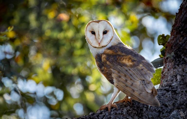Owls instead of chemicals. The new decision of California winemakers